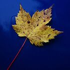 """""""Blue Maple"""" by frogwithwings"""