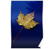 """Blue Maple"" Poster"