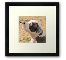 Eager To Please Framed Print