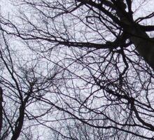 Branches Grey Sticker