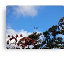As the season flies by ('Leaf'ing below a jet plane) Canvas Print