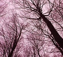 Branches Pink by Laia Ribera