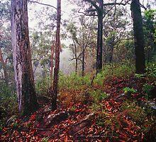 Mangrove Mountain by Adam  Smith