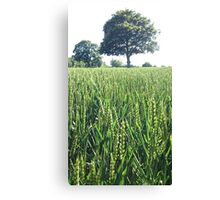Green Wheat Field in Summer Canvas Print