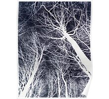 Branches Black Poster