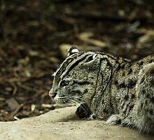 The Fishing Cat by TMphotography