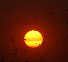 A Night for the Birds!!! by Larry Trupp