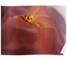 The Lamp Rose Poster