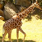 Young & tall! by vasu