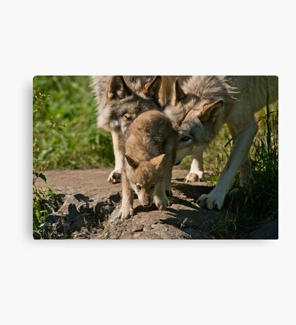 Timber Wolves And Pup Canvas Print