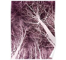 Branches Dark Pink Poster