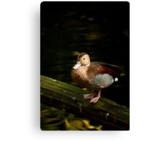 Vibrant Duck Canvas Print