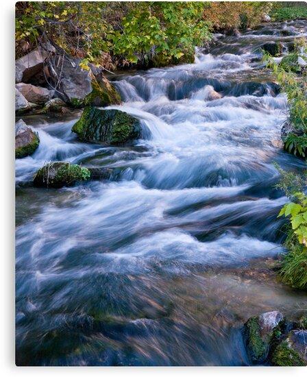 Jones Creek by Kim Barton