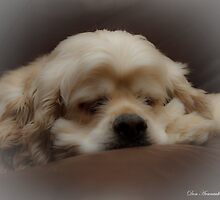 Let Sleeping Dogs Lie by Don Arsenault