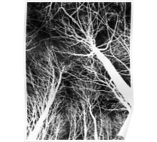 Branches B&W Poster