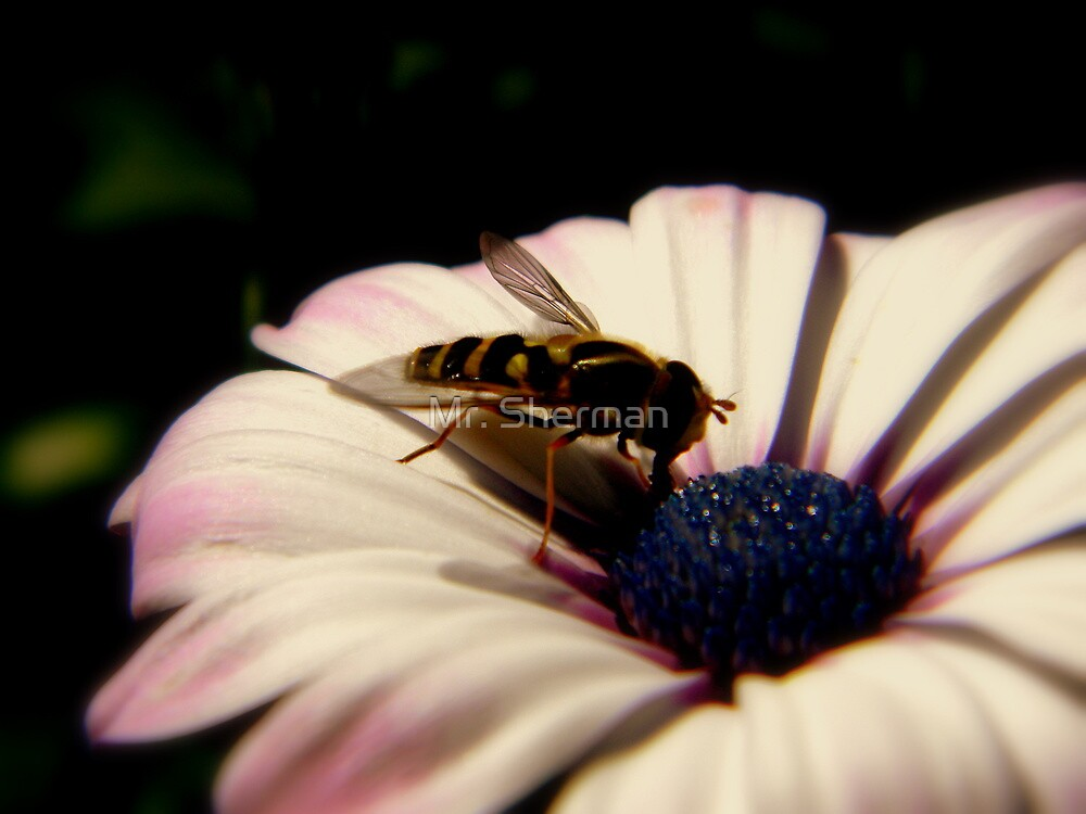 bee in a flower. by Mr. Sherman