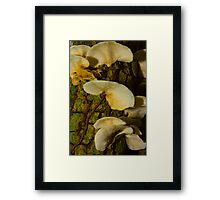Fungi on dead tree. Framed Print