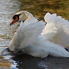 Royal Swans by Agood