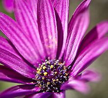 flower7 by Kat36