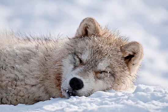 I lay my head down to sleep by Michael Cummings