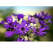 Pretty in purple... Photographic Print