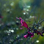 Desert Flowers by AJM71