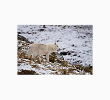 Arctic Wolf on Hill T-Shirt
