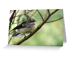 Grey Fantail (Rhipidura fuliginosa)  Greeting Card