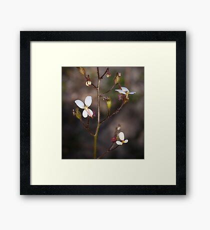 trigger flowers, wireless hill Framed Print