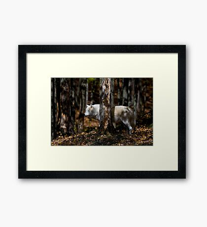 Arctic Wolf in Forest Framed Print