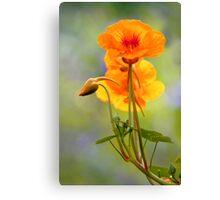 Spring - Nasturtium Canvas Print