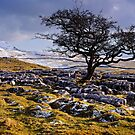 Limestone Country - The Yorkshire Dales by Dave Lawrance