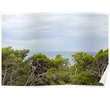 Gnarled Trees and Sea Poster