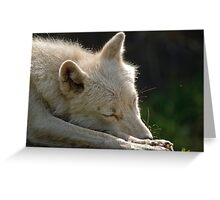 Sleeping Arctic Wolf  Greeting Card
