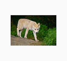 Arctic Wolf Pup on Rock T-Shirt