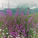 Summer Wildflowers, near Crested Butte, Colorado, USA by Adrian Paul