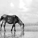 Wild Horse on the Flats by NCBobD