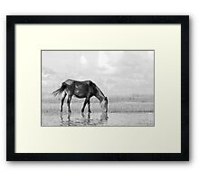 Wild Horse on the Flats Framed Print