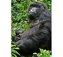 Gorilla Momma Photographic Print