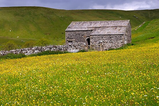 Summer meadow - The Yorkshire Dales by Dave Lawrance