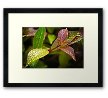 droplets_6 Framed Print