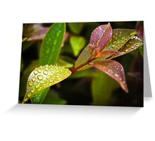 droplets_6 Greeting Card