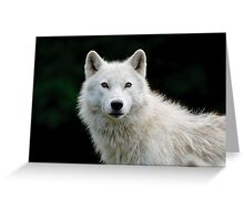 Arctic Wolf Portrait Greeting Card
