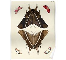Exotic butterflies of the three parts of the world Pieter Cramer and Caspar Stoll 1782 V2 0052 Poster