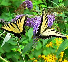 Tiger Swallowtail Pair by DOGraphics
