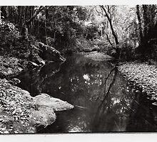 Nimbin Creek by ein22