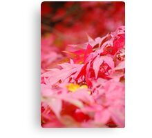autumn's leaves fall Canvas Print