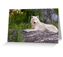 Arctic Wolf on Rocks Greeting Card