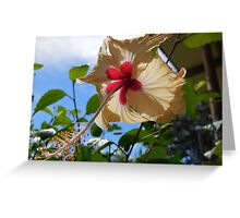 Closeup of a Hibiscus Flower Greeting Card