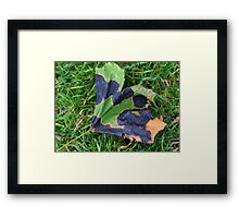 A Multi-colored Leaf Framed Print